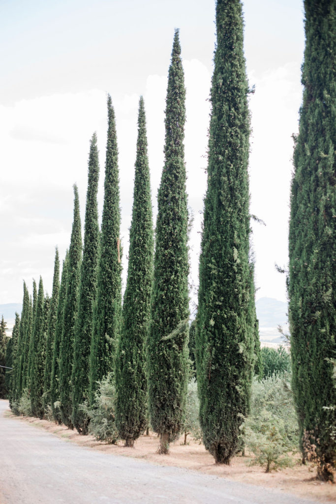 Tuscan cypresses - Chinese Tea Ceremony in Italy- Italian Wedding Designer