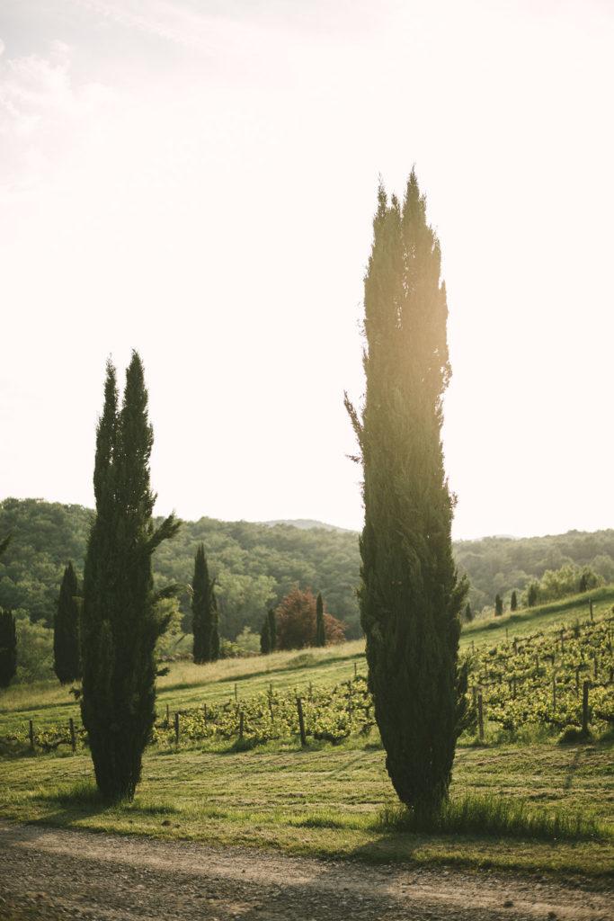 Cypresses - Wedding at Villa La Selva - Italian Wedding Designer